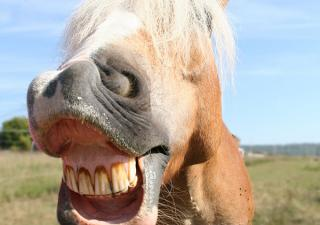 Dental Care for Horses